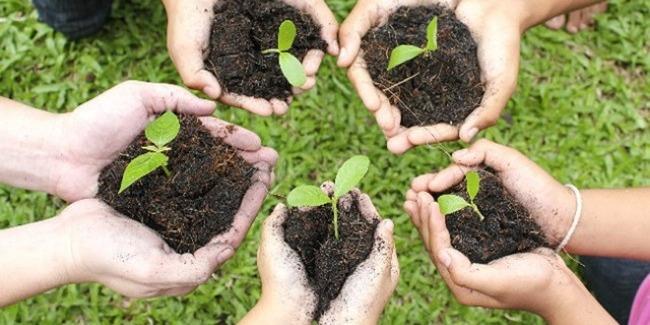 AGF organizes tree planting campaign